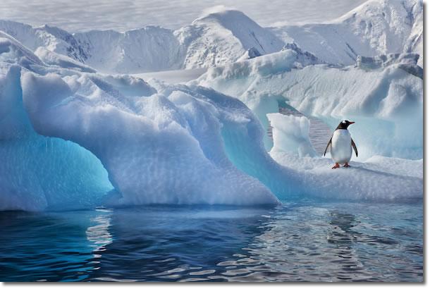 Penguin in the ice in Antractica